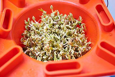 Food, Feed and Bird Seed Testing - AgEtal
