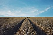Single Touch Payroll - What farmers need to know