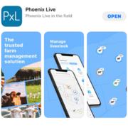 Phoenix Live Mobile Banner