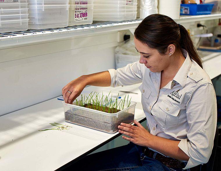 Seedling Vigour Analysis - AgEtal