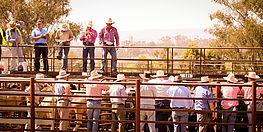 Livestock Management App
