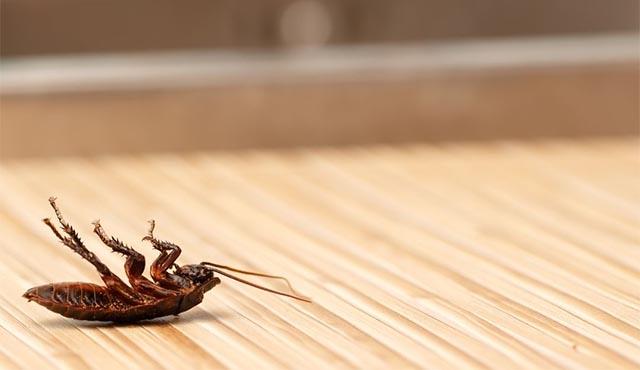 Dead cockroach on wooden floor