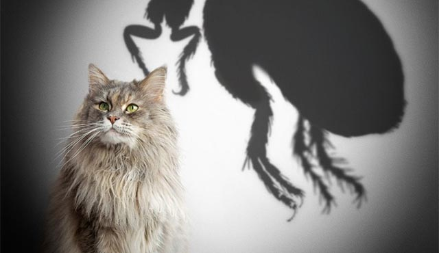 Cat sitting in front of shadow of a flea